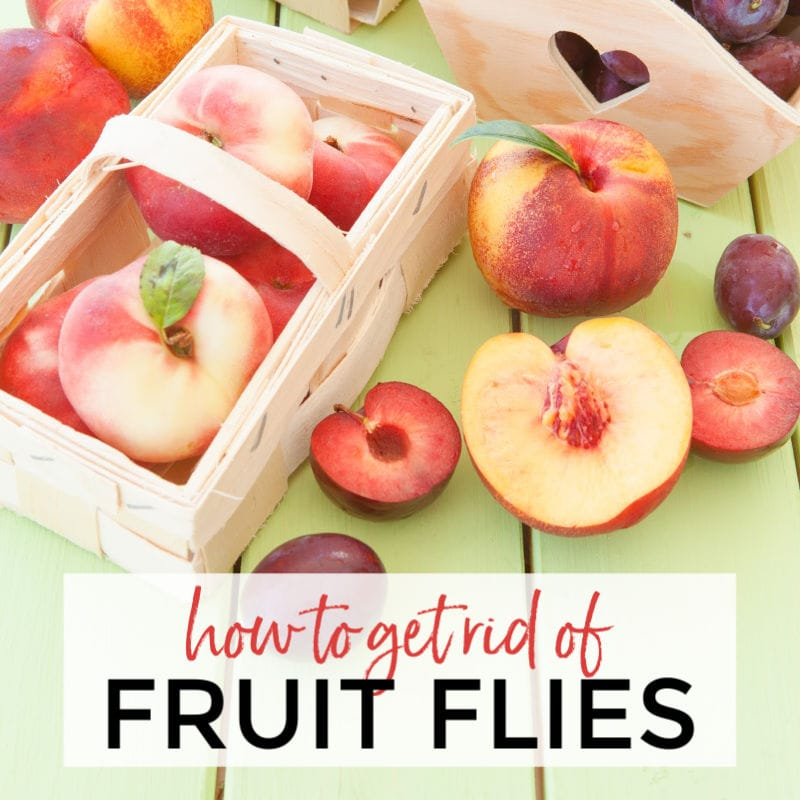 Peaches & plums in a crate. Homemade Fruit Fly Trapper | A Reinvented Mom