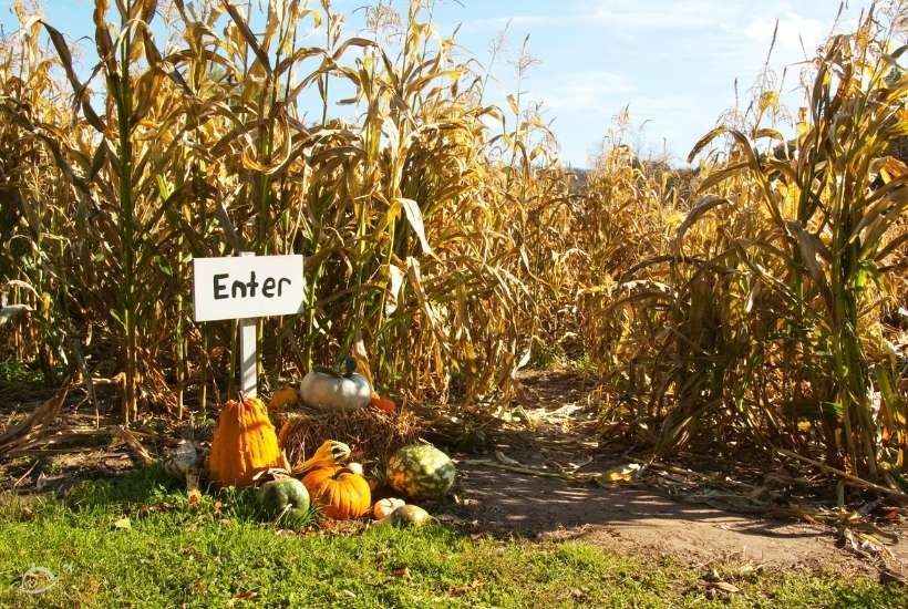 entrance to corn maze with Enter sign surrounded by pumpkins