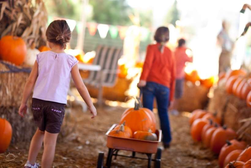 children at a pumpkin patch, one pulling a wagon filled with pumpkins